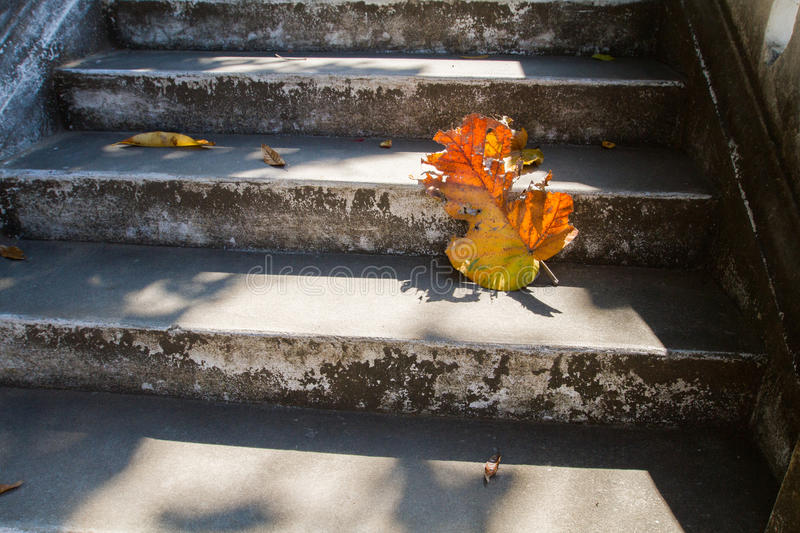 Grey old stairs with beautiful dry teak leaf on floor with amazing shadow, poetic scene and artistic background. Picturesque grey old stairs with beautiful royalty free stock images
