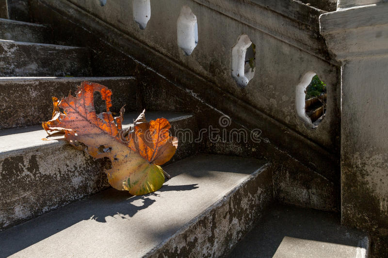 Grey old stairs with beautiful dry teak leaf on floor with amazing shadow, poetic scene and artistic background. Picturesque grey old stairs with beautiful stock photography