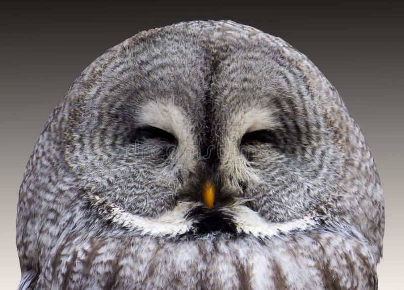 Grey Owl Free Public Domain Cc0 Image