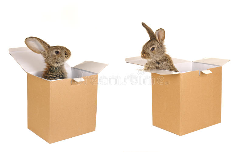 Grey rabbit. On a white background royalty free stock photos