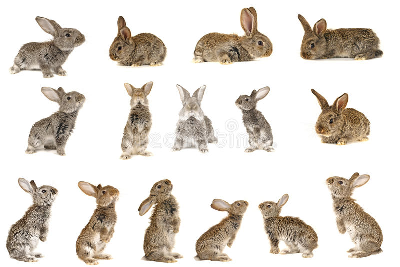 Grey rabbit. On a white background stock photos