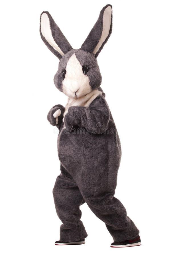 Grey rabbit. Funny grey rabbit isolated on white background royalty free stock image