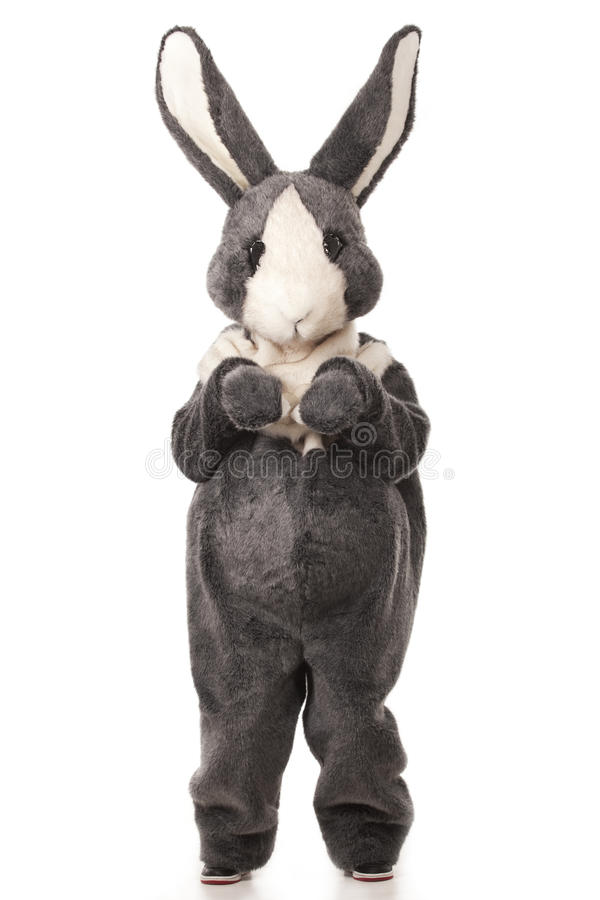Download Grey rabbit stock photo. Image of christmas, fluffy, greeting - 17984920