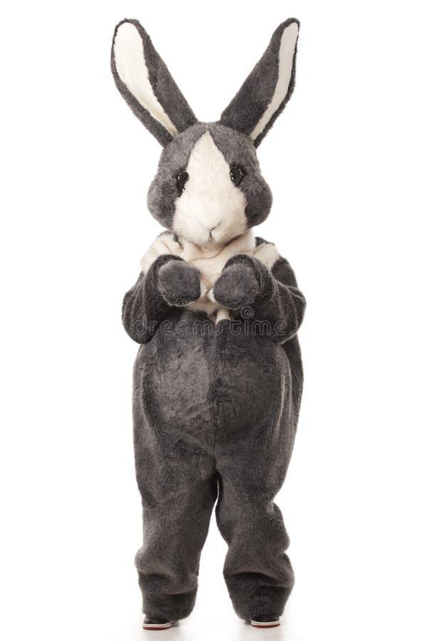 Grey rabbit. Funny grey rabbit isolated on white background stock photo