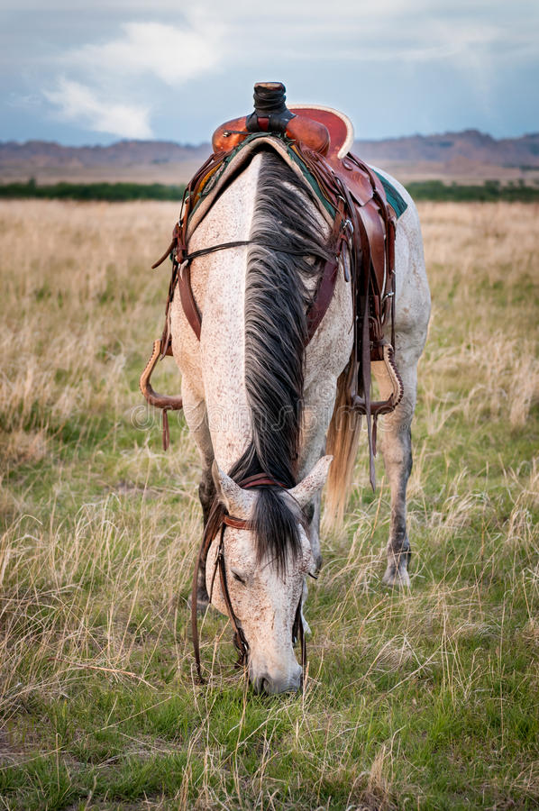 Grey Ranch Horse Grazes in the Badlands royalty free stock photos