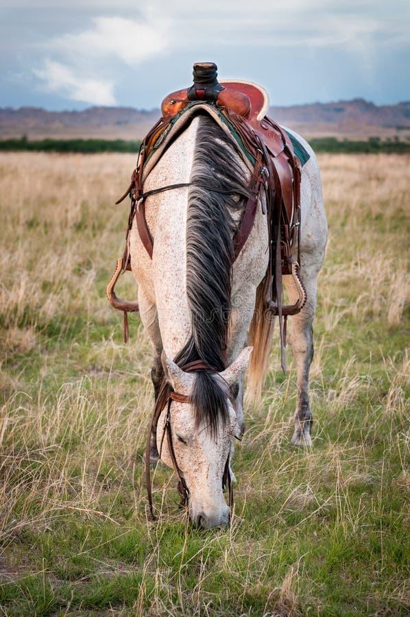 Grey Ranch Horse Grazes in the Badlands. South Dakota royalty free stock photos