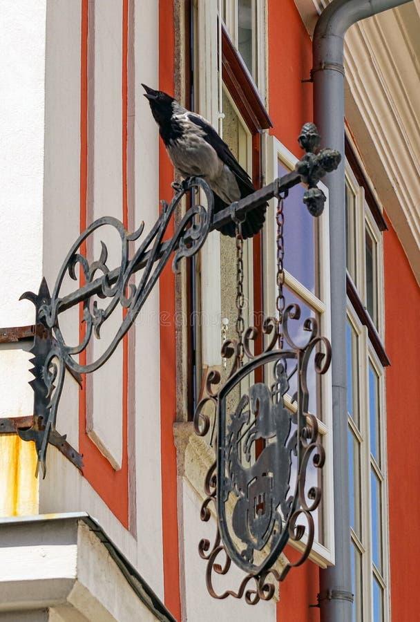 Grey Raven na construção imagens de stock royalty free