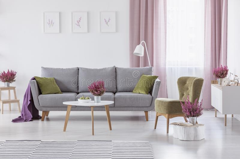 Grey settee with green cushions and purple blanket in real photo of white living room interior with coffee table. With ts and heather, posters on wall and royalty free stock images