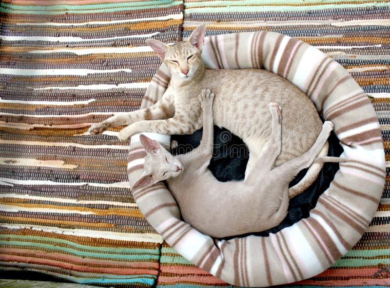 Grey Short Fur Cat Free Public Domain Cc0 Image