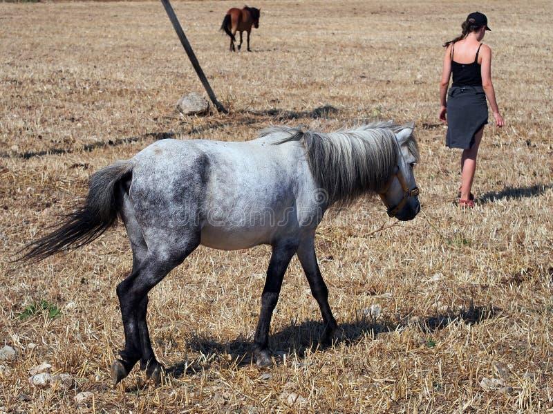 Grey Skyros Pony, Grecia fotos de archivo libres de regalías