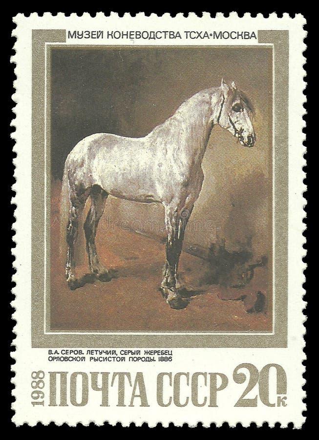 Grey Stallion della razza dello zampone di Orlov fotografia stock