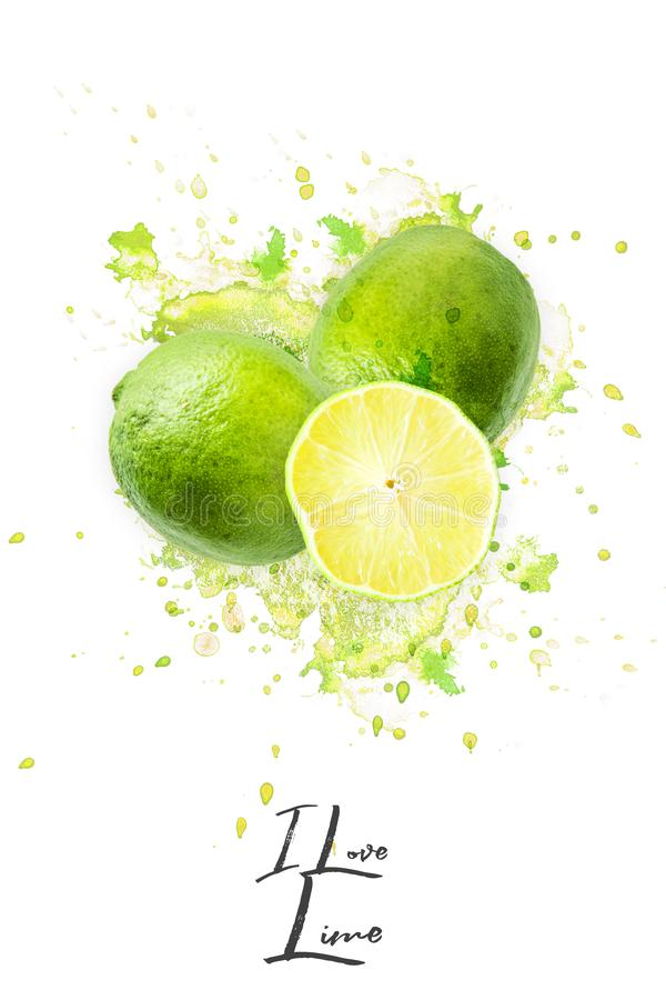 Great photo montage with explanting Lime on a white background stock photo