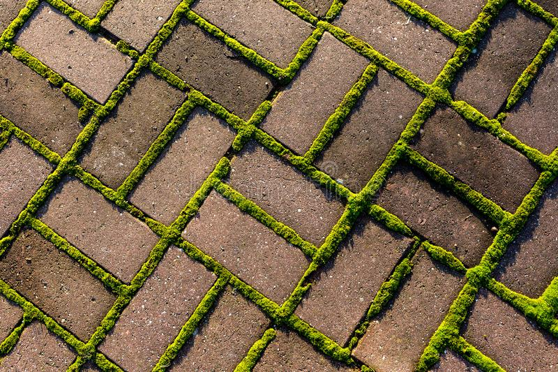 Grey stone footpath with green moss, close up image royalty free stock photos