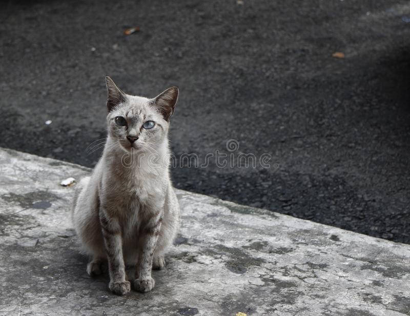 Grey stray cat. A grey stray cat sitting cute royalty free stock images