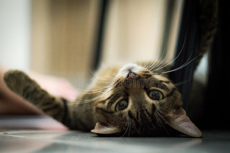Cute cat laid down o floor royalty free stock photography