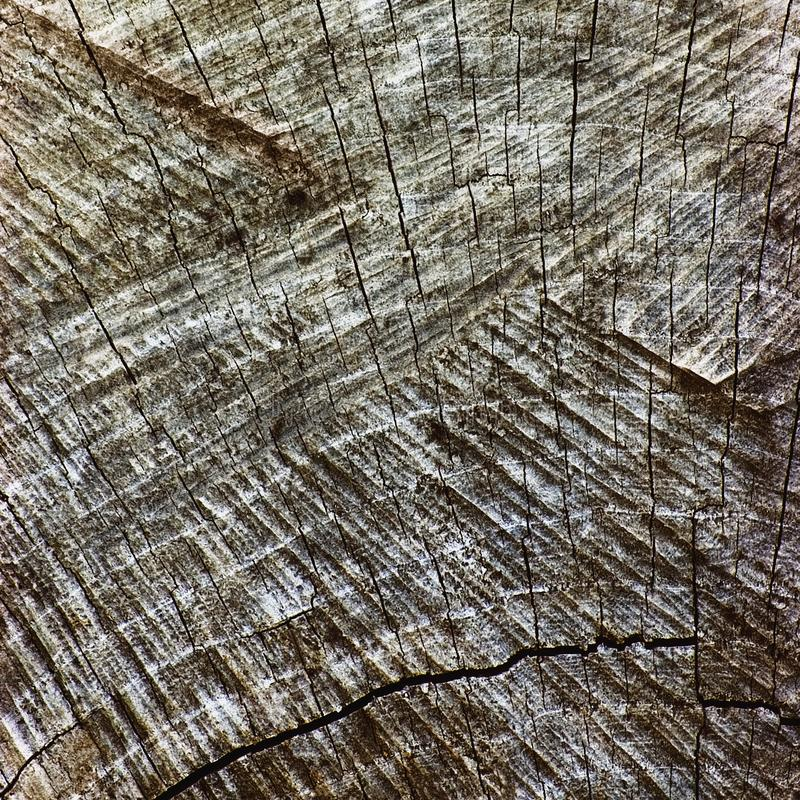 Grey Tree Stump Cut Texture resistido natural, grande close up envelhecido velho detalhado de Gray Lumber Background Horizontal M imagens de stock