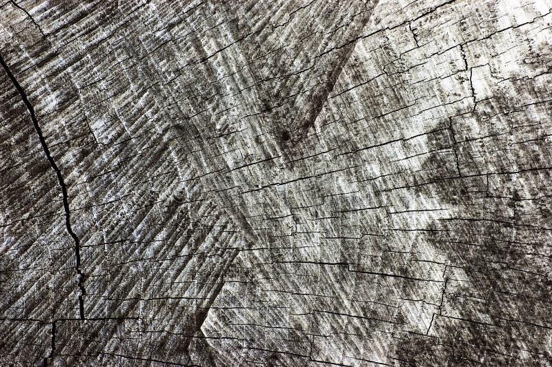 Grey Tree Stump Cut Texture superficiel par les agents naturel, grand vieux plan rapproché âgé détaillé de Gray Lumber Background photographie stock libre de droits