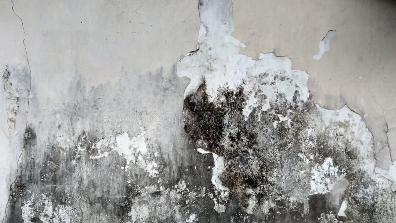Grey Wall med Grungetextur royaltyfria bilder