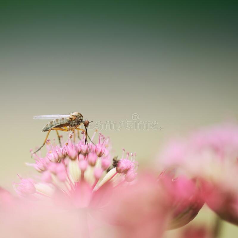 Download Grey Weevil stock photo. Image of free, blossom, flora - 82974226