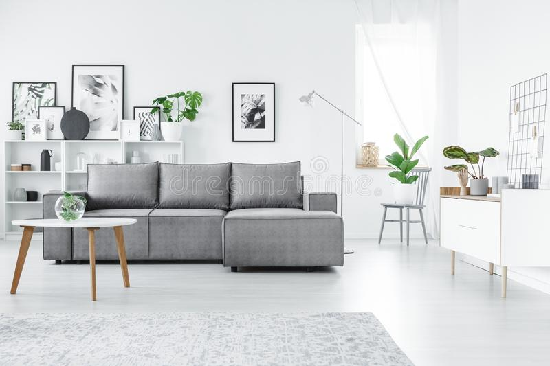 Grey and white living room. Grey corner sofa in white living room interior with table and posters on the wall stock photo
