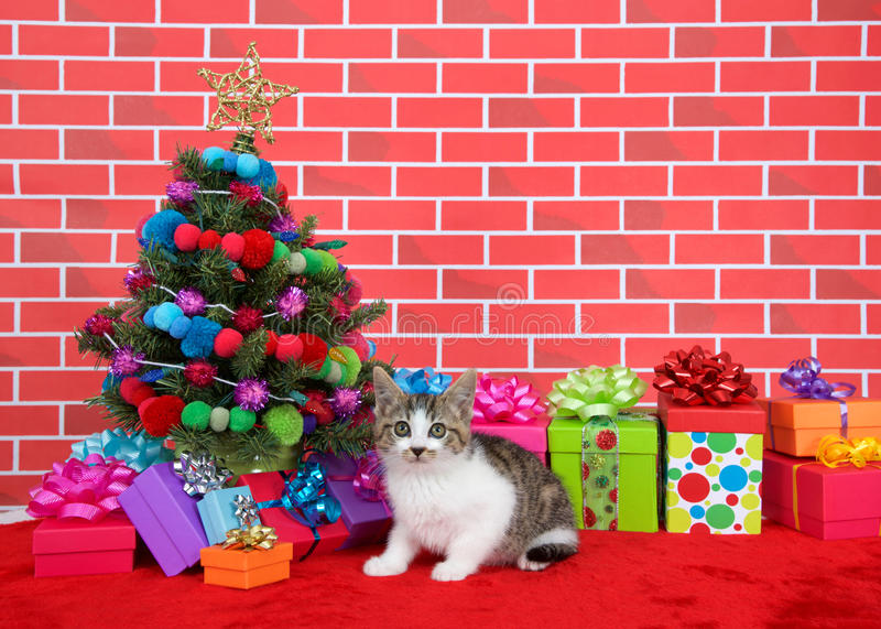 Grey and white tabby kitten next to christmas tree stock photos