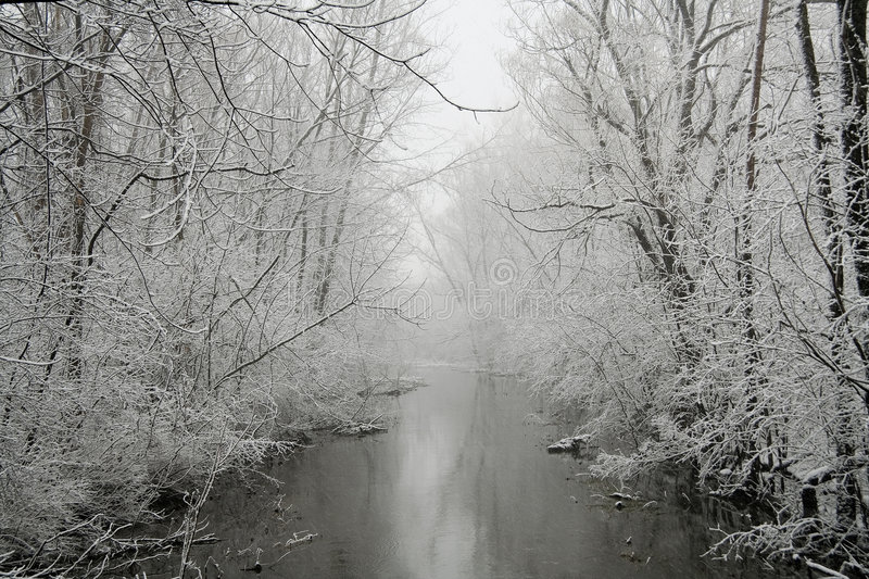 Download Grey Winter stock photo. Image of tranquility, wilderness - 465430