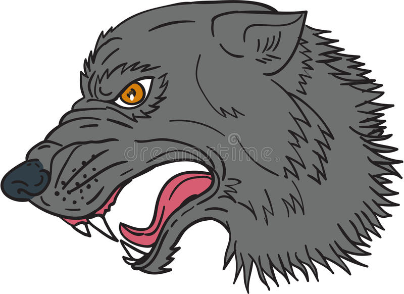 Grey Wolf Head Growling Drawing ilustração do vetor