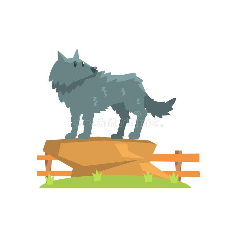 Grey Wolf Standing On Large Rock sulla toppa dell'erba verde nella recinzione dello zoo dell'aria aperta royalty illustrazione gratis