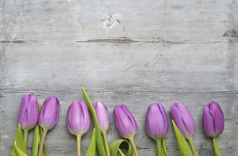 Grey wooden background with purple white tulips,snowdrop and crocus border in a row and empty copy space, spring summer decoration royalty free stock image