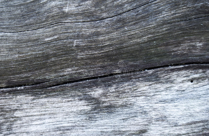 Grey wooden texture macro photo. White and grey wood background. White old tree near the sea. Curves and lines on rustic timber. Rough timber texture. Sea wood royalty free stock image