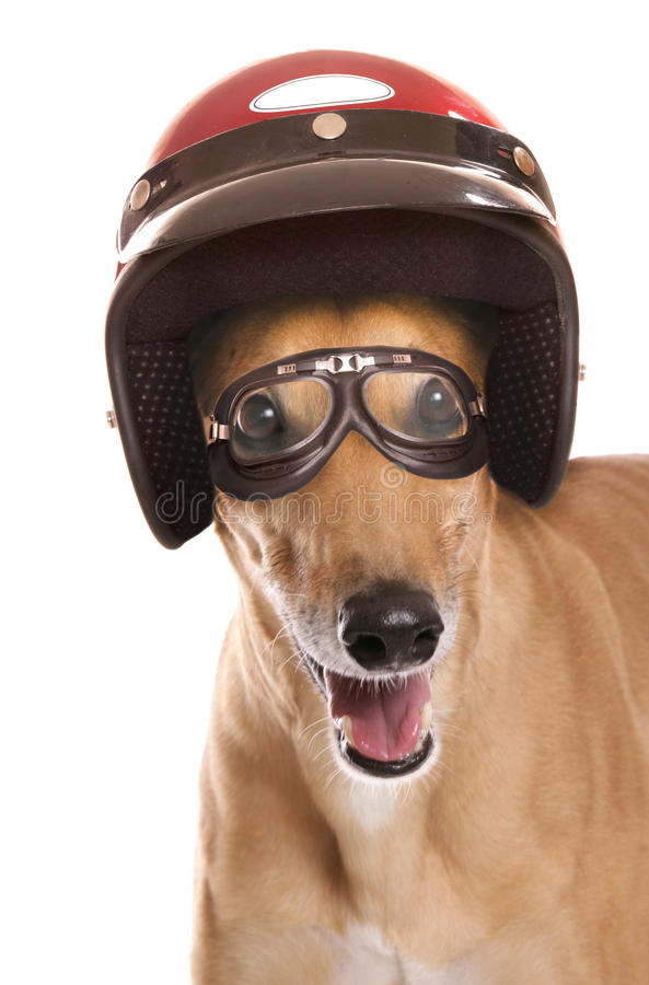 Greyhound αγώνας στοκ εικόνα με δικαίωμα ελεύθερης χρήσης