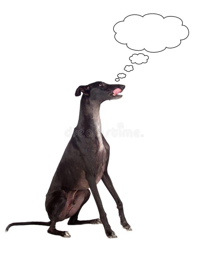 greyhound σκυλιών διασταύρωσης &sig στοκ εικόνες