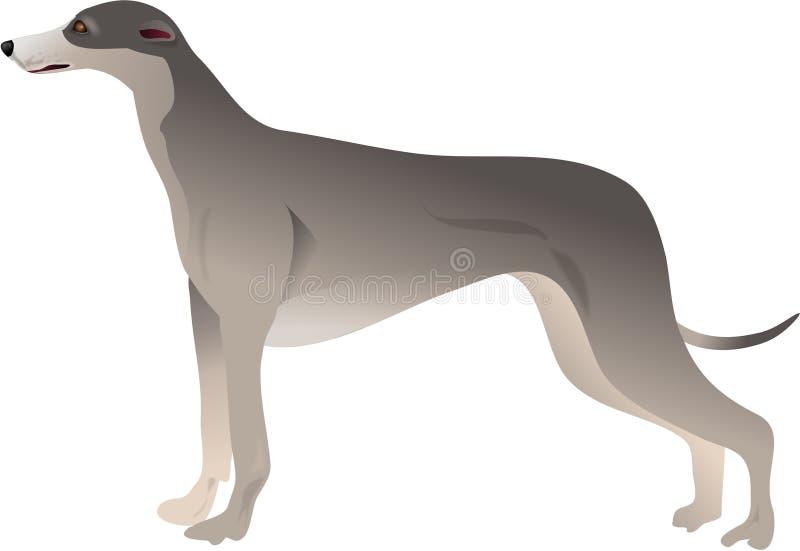 Greyhound Στοκ εικόνα με δικαίωμα ελεύθερης χρήσης