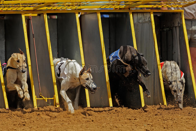 Greyhound racing stock photo