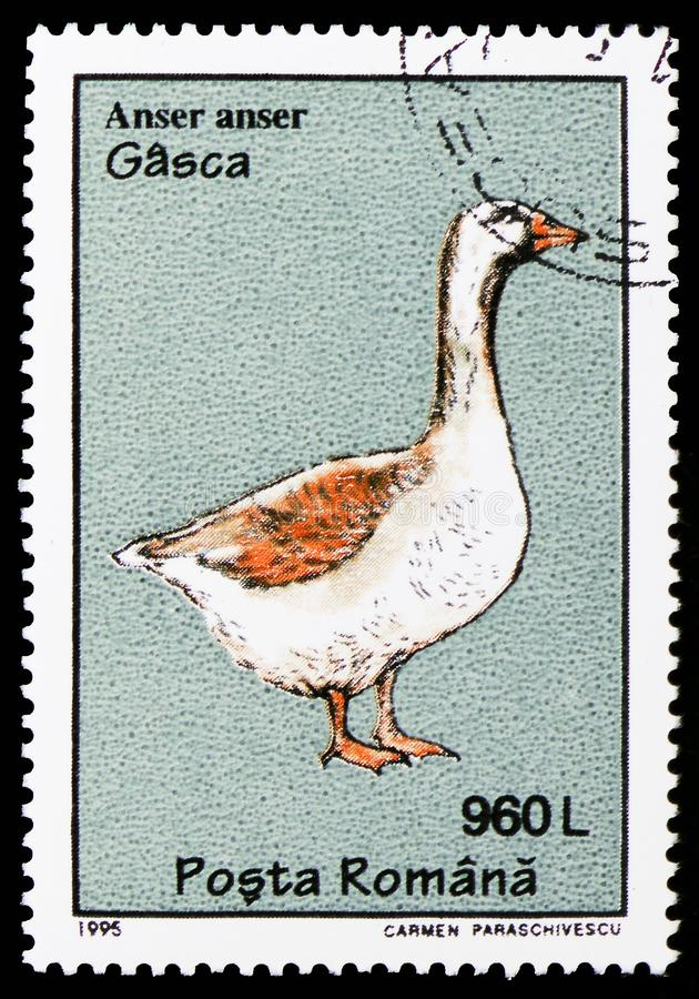 Greylag Goose (Anser anser), Birds serie, circa 1995. MOSCOW, RUSSIA - OCTOBER 6, 2018: A stamp printed in Hungary shows Greylag Goose (Anser anser), Birds serie royalty free stock images
