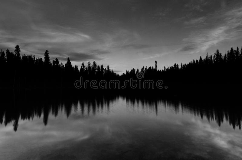 Greysacle Photo Of Trees Reflected On Body Of Water Free Public Domain Cc0 Image