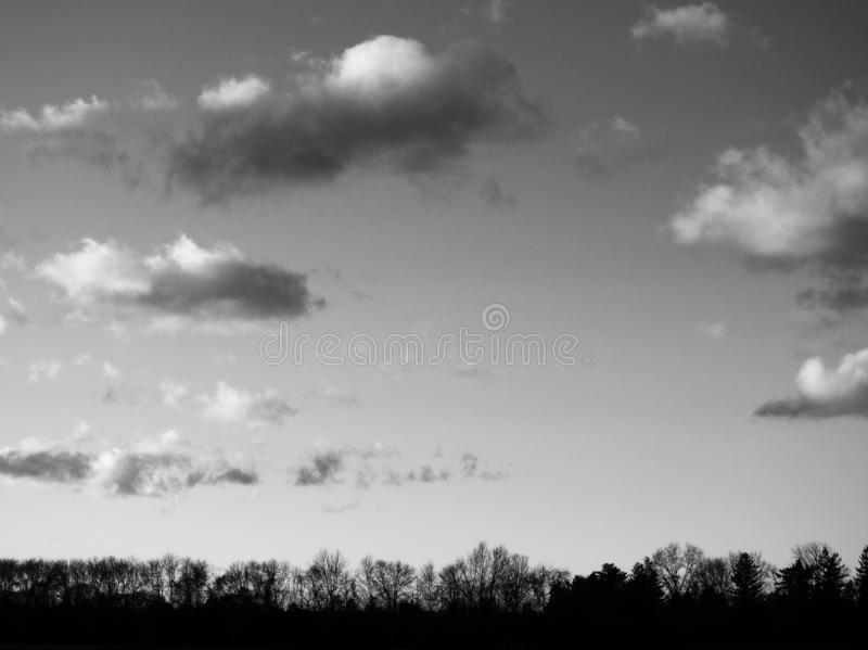 Greyscale horizontal shot of a lot of bare trees under the beautiful cloudy sky. A greyscale horizontal shot of a lot of bare trees under the beautiful cloudy royalty free stock image