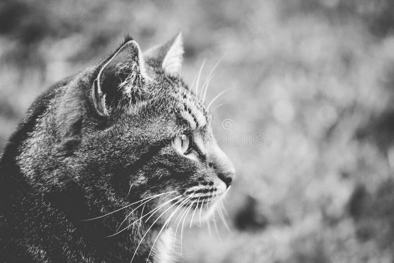 Greyscale Photo Of Cat Free Public Domain Cc0 Image