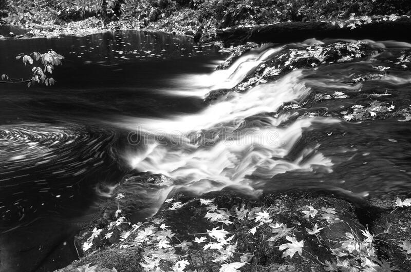 Greyscale Photo of Water and Leaves royalty free stock photo