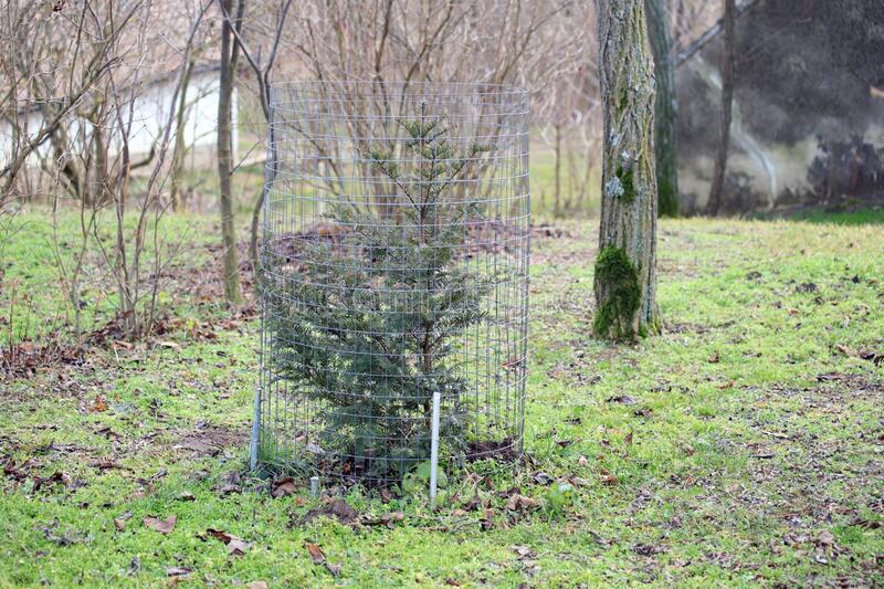 Grid protection around a young planted tree stock photos