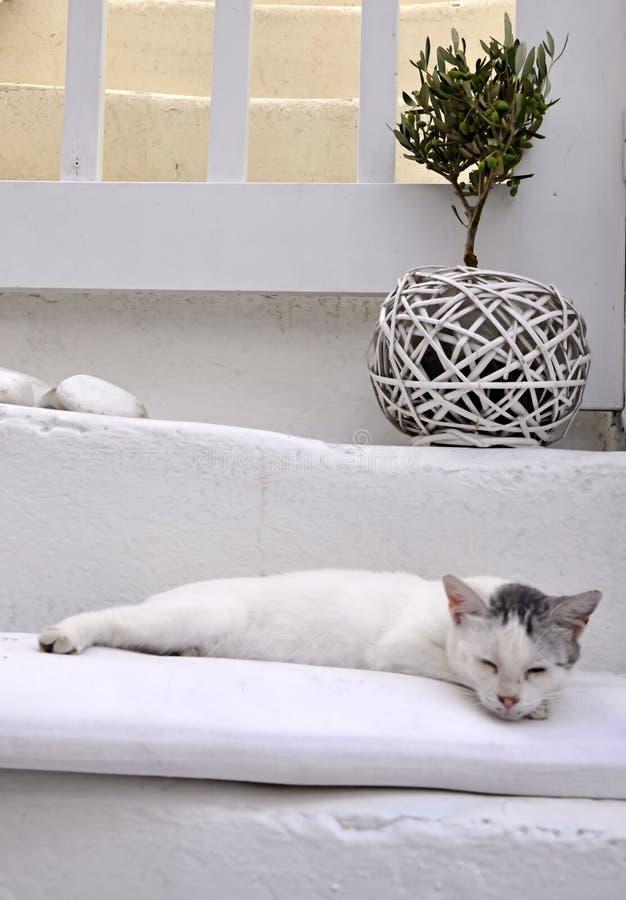 Griechische Katze Lizenzfreie Stockbilder