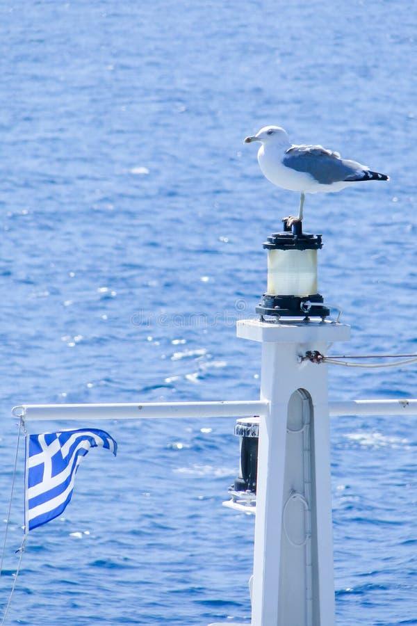 Griechische Seemöwe lizenzfreie stockfotos