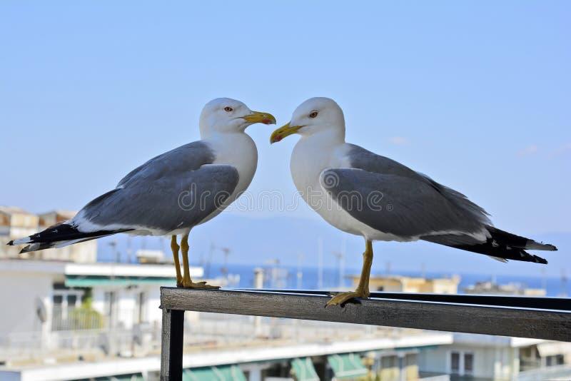 Griekenland, de Dierkunde, Vogels royalty-vrije stock foto's