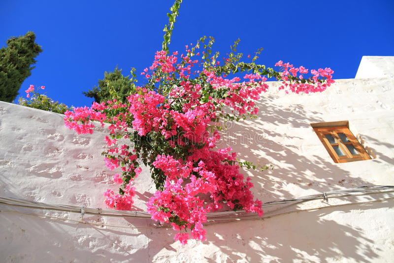 Griekenland/Patmos: Bougainvillea tegen Witte Muur royalty-vrije stock afbeelding