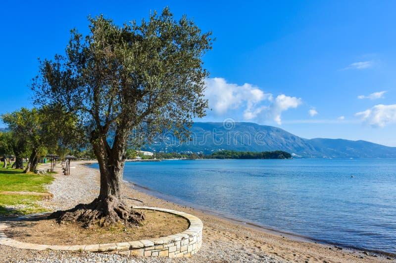 Grieks strand op het Eiland Korfu in het Middellandse-Zeegebied royalty-vrije stock foto's