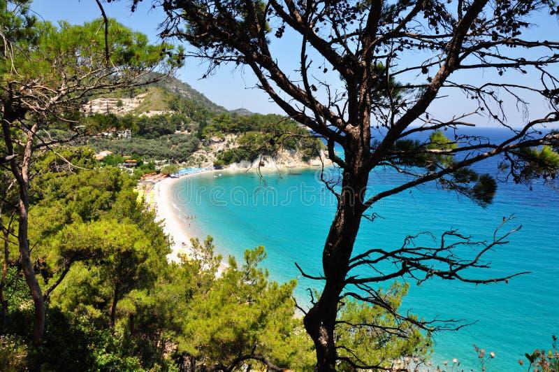 Griekse beweging veroorzakende de pijnboomnaaldboom van de de zomer Egeïsche turkooise en groene aard stock afbeelding