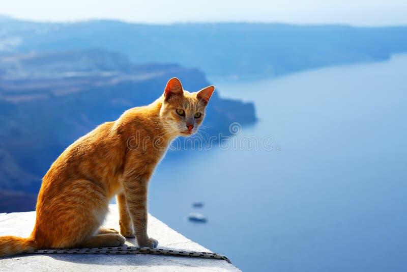 Griekse rode kat, tegen mooie overzeese mening van Santorini, Griekenland royalty-vrije stock afbeeldingen