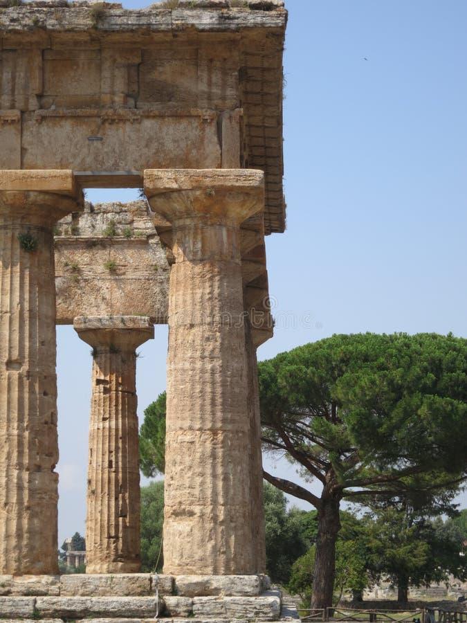 Griekse Tempel in Paestum Italië met achtergrondpijnboom royalty-vrije stock afbeelding