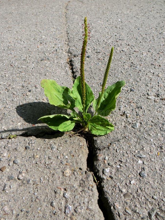 Grieta en el asfalto fotografía de archivo