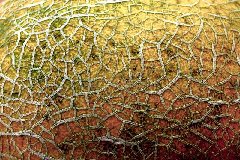 Grietas de la corteza de la fruta foto de archivo libre de regalías
